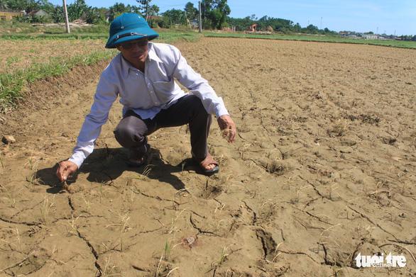 Nắng nóng kéo dài, Thanh Hóa lo mất gần 1.000ha lúa mùa - Ảnh 2.