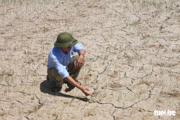 Nắng nóng kéo dài, Thanh Hóa lo mất gần 1.000ha lúa mùa - Ảnh 1.