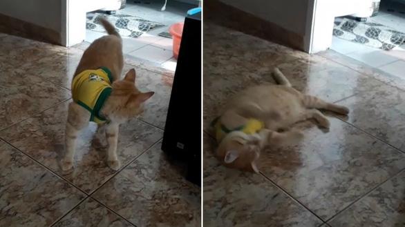 Khi chó mèo biết té và ăn vạ giống Neymar ở World Cup - Ảnh 2.