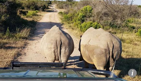 Định cắt sừng tê giác, 3 tên săn trộm bị sư tử ăn thịt - Ảnh 1.
