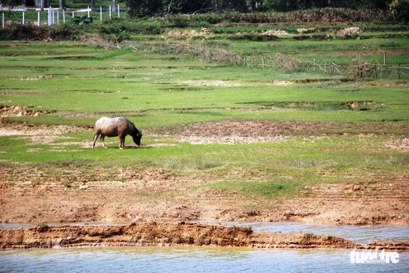 25 hồ Nghệ An xuống mực nước chết, 23.000ha lúa khô hạn - Ảnh 1.