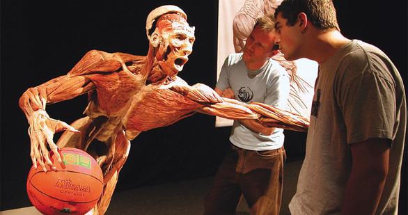 Tranh luận quanh triển lãm về cơ thể và nội tạng người - Ảnh 3.