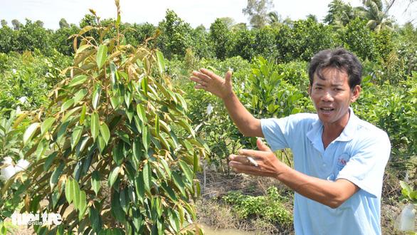 Thấy trồng sầu riêng dễ ăn, nhiều nông dân lại bỏ lúa - Ảnh 1.