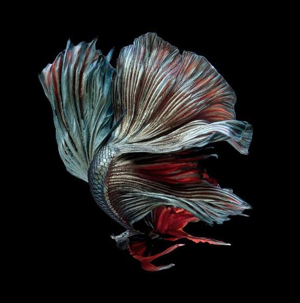 Ngắm những vũ công dưới nước huyền bí của nhiếp ảnh gia Thái - Ảnh 2.