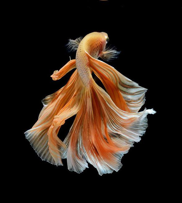 Ngắm những vũ công dưới nước huyền bí của nhiếp ảnh gia Thái - Ảnh 3.