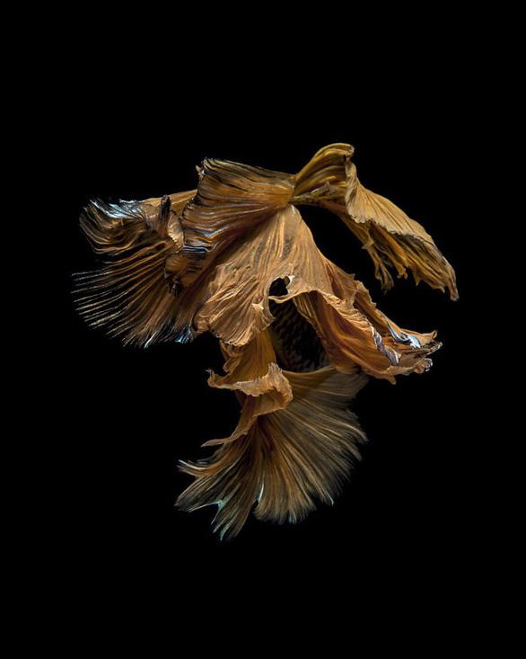 Ngắm những vũ công dưới nước huyền bí của nhiếp ảnh gia Thái - Ảnh 4.