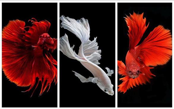 Ngắm những vũ công dưới nước huyền bí của nhiếp ảnh gia Thái - Ảnh 5.