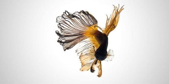 Ngắm những vũ công dưới nước huyền bí của nhiếp ảnh gia Thái - Ảnh 6.