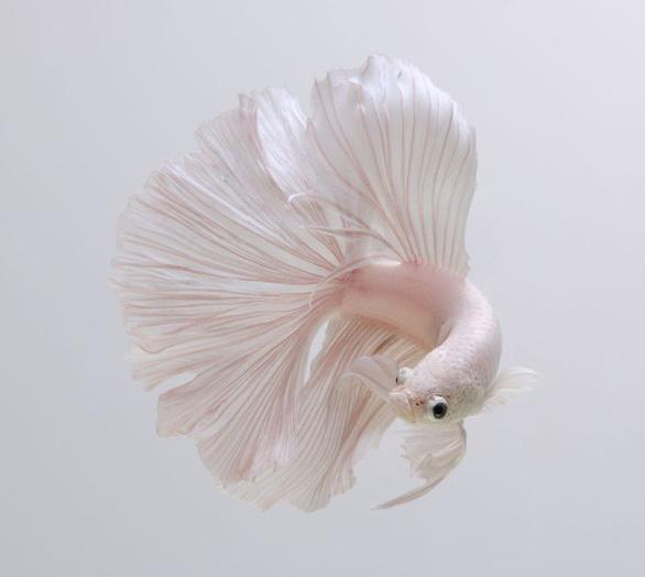 Ngắm những vũ công dưới nước huyền bí của nhiếp ảnh gia Thái - Ảnh 7.