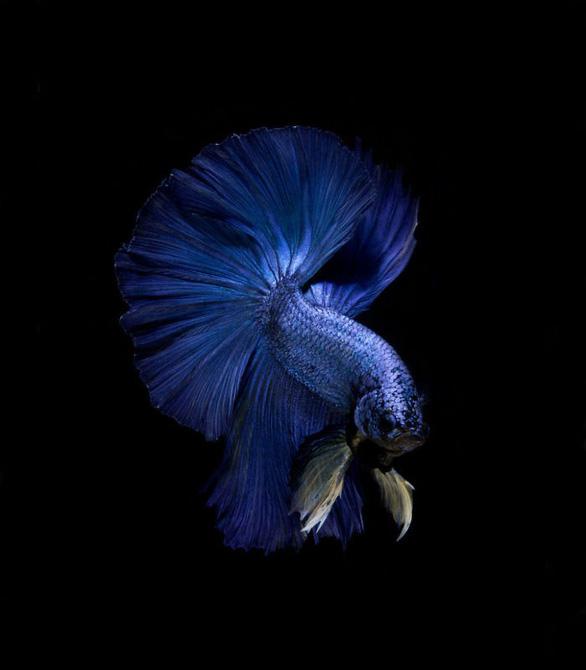 Ngắm những vũ công dưới nước huyền bí của nhiếp ảnh gia Thái - Ảnh 11.
