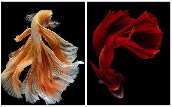 Ngắm những vũ công dưới nước huyền bí của nhiếp ảnh gia Thái - Ảnh 12.