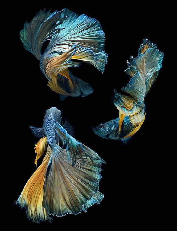 Ngắm những vũ công dưới nước huyền bí của nhiếp ảnh gia Thái - Ảnh 13.