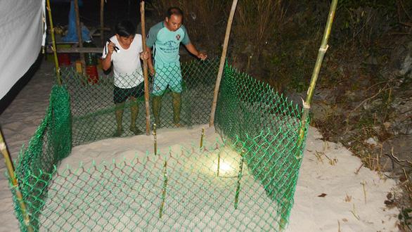 Đưa rùa về lại Cù Lao Chàm - Kỳ cuối: Giữ môi trường sống cho rùa - Ảnh 4.
