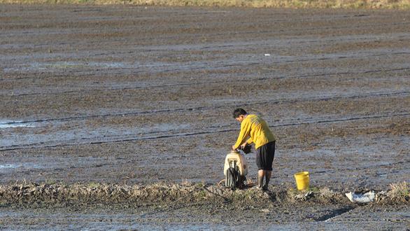 Nông sản chưa sạch, lỗi không chỉ nông dân - Ảnh 1.