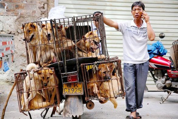 Vòng quanh thế giới thịt chó - Kỳ 4: Nguy cơ nhiễm bệnh từ thịt chó - Ảnh 1.