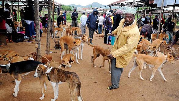 Vòng quanh thế giới thịt chó - kỳ 3: Món chó ở châu Phi và Thụy Sĩ - Ảnh 3.