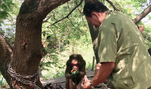 Đưa khỉ mặt đỏ quý hiếm về trung tâm cứu hộ nuôi dưỡng - Ảnh 1.