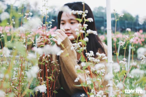 Vườn hoa tam giác mạch  xuất hiện ở Sài Gòn - Ảnh 1.