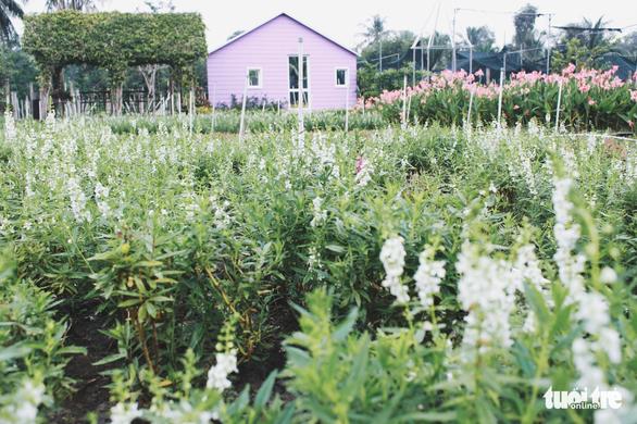 Vườn hoa tam giác mạch  xuất hiện ở Sài Gòn - Ảnh 7.