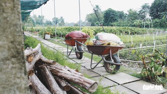 Vườn hoa tam giác mạch  xuất hiện ở Sài Gòn - Ảnh 8.