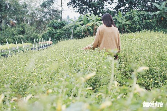 Vườn hoa tam giác mạch  xuất hiện ở Sài Gòn - Ảnh 9.