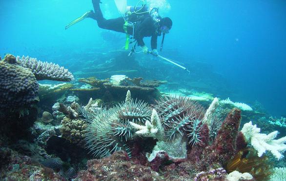 Đi du lịch nhớ gìn giữ môi trường biển - Ảnh 6.