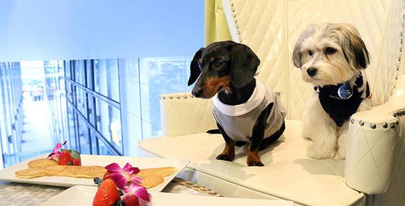 Khách sạn Mỹ cho mượn chó cưng để giải sầu - Ảnh 4.