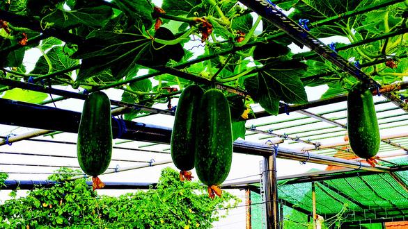 Vườn rau tình yêu của Thuận - Ảnh 1.