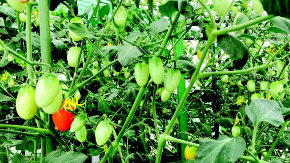 Vườn rau tình yêu của Thuận - Ảnh 5.