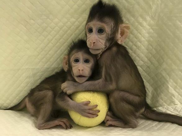 Trung Quốc đã nhân bản vô tính khỉ, người chỉ còn là thời gian - Ảnh 2.