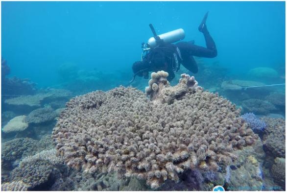Cuộc thảm sát san hô đại dương - Ảnh 1.