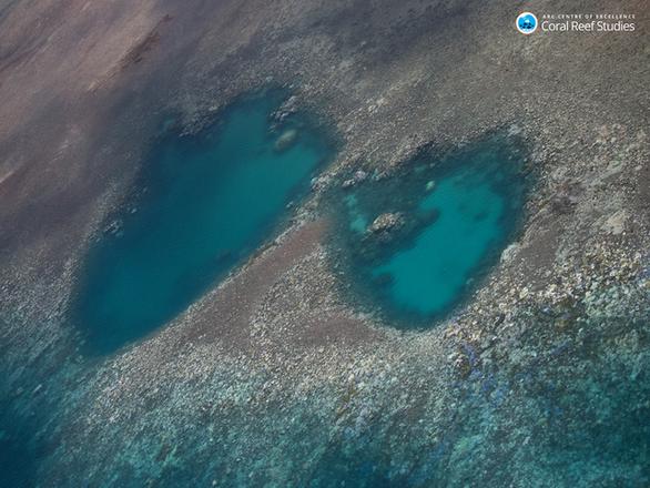 Cuộc thảm sát san hô đại dương - Ảnh 2.