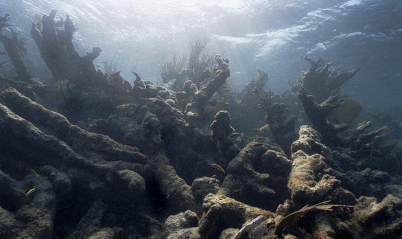 Cuộc thảm sát san hô đại dương - Ảnh 3.