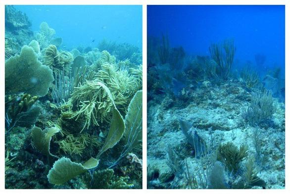 Cuộc thảm sát san hô đại dương - Ảnh 4.