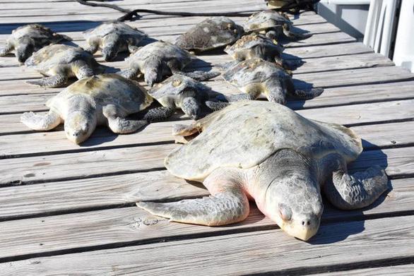 Mỹ chìm trong băng giá, động vật hoang dã lờ đờ - Ảnh 6.