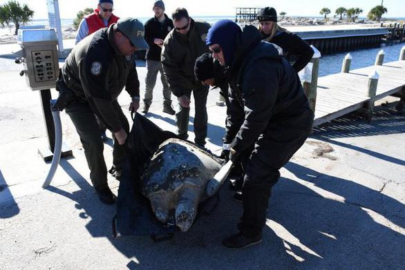 Mỹ chìm trong băng giá, động vật hoang dã lờ đờ - Ảnh 7.