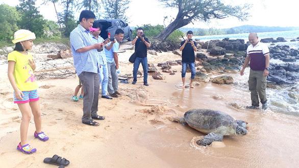 Vận động người dân giao 4 rùa biển thả về đại dương - Ảnh 1.