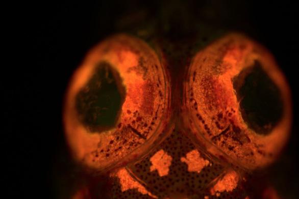 Đẹp lung linh rùa phát sáng, bản đồ kho báu của não... - Ảnh 5.