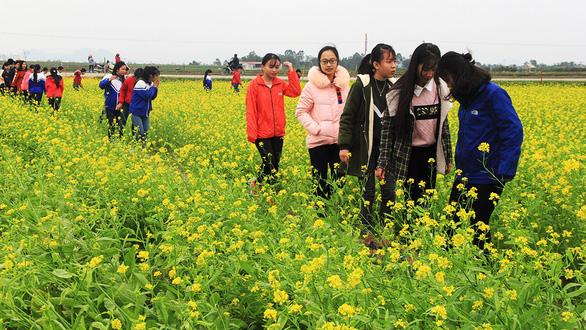 Thanh Hóa: Cánh đồng hoa cải hút du khách tham quan - Ảnh 2.