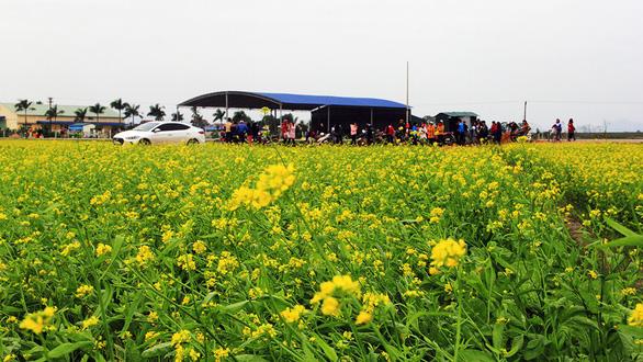 Thanh Hóa: Cánh đồng hoa cải hút du khách tham quan - Ảnh 3.