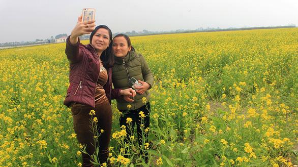 Thanh Hóa: Cánh đồng hoa cải hút du khách tham quan - Ảnh 5.