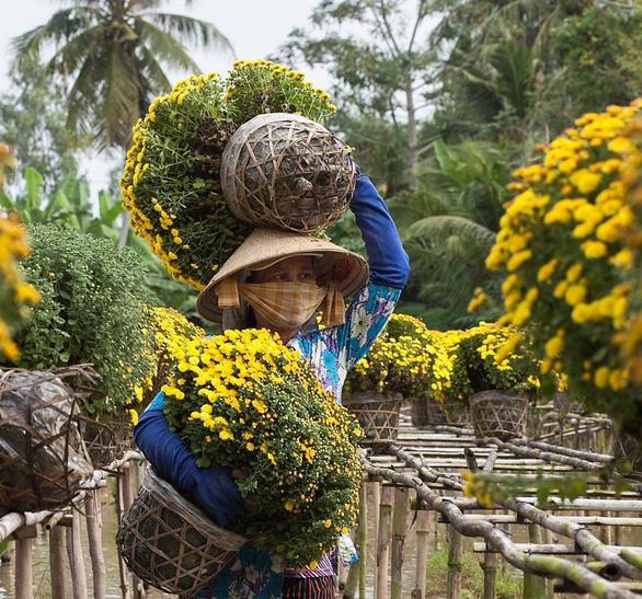 Làng hoa Sa Đéc đón Tết Mậu Tuất - Ảnh 5.