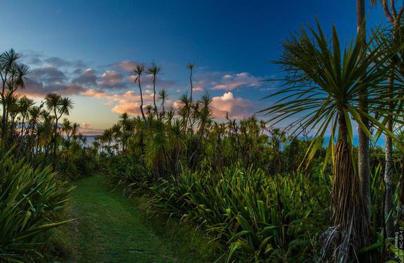 10 trải nghiệm miễn phí ở Auckland (phần 2) - Ảnh 3.