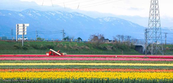 Cung điện hoa tulip rực rỡ ở Nhật Bản - Ảnh 9.