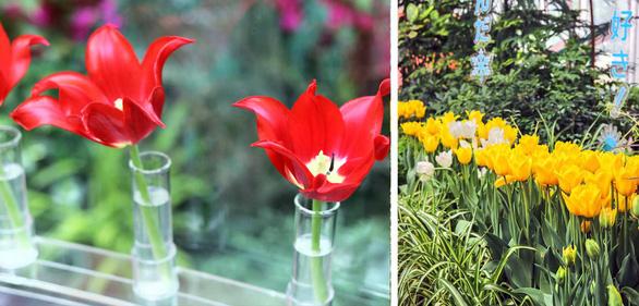 Cung điện hoa tulip rực rỡ ở Nhật Bản - Ảnh 2.