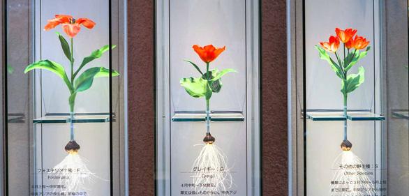 Cung điện hoa tulip rực rỡ ở Nhật Bản - Ảnh 3.