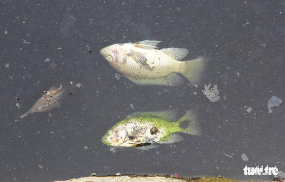 Cá chết trắng gây ô nhiễm hào thành cổ Vinh - Ảnh 8.