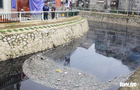 Cá chết trắng gây ô nhiễm hào thành cổ Vinh - Ảnh 4.