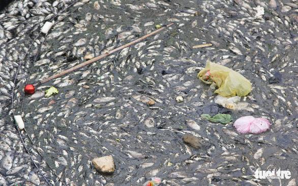 Cá chết trắng gây ô nhiễm hào thành cổ Vinh - Ảnh 5.