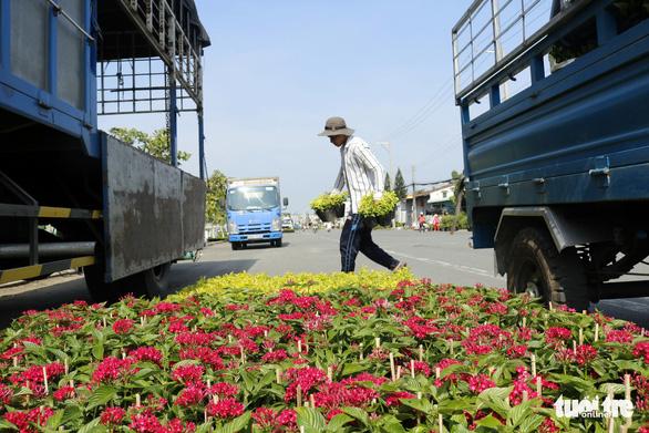 Nhà vườn Sa Đéc đầu tư tiền tỉ cho làng hoa dịp tết - Ảnh 3.